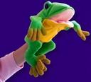 Freddie the Frog Teachers Hand Pupper